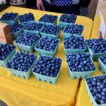 [FILLED] FARM JOB: LADYSMITH, BC – Yellow Point Farms , Blueberry Picker